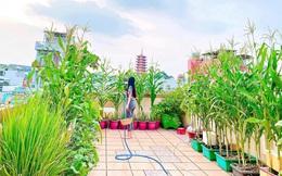 Khu vườn trên sân thượng đủ mọi loại rau sạch của nữ CEO xinh đẹp ở Sài Gòn