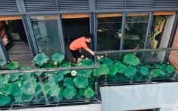 """""""Hồ sen"""" với đủ loại hoa hiếm trên penthouse 300m² của chồng dành tặng vợ ở Hà Nội"""