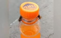 Clip: Hai chú ong hợp tác cùng nhau mở nắp chai nước ngọt khiến MXH thích thú, các nhà khoa học bảo chúng còn khôn hơn thế