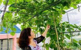 Khu vườn xanh tươi không khác gì nông trại trên sân thượng ở TP Thủ Đức, Sài Gòn