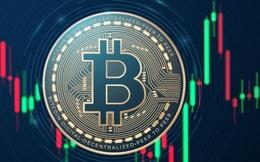 Vọt lên tới hơn 42.000 USD/coin vào cuối tuần, Bitcoin lại đang giảm tới gần 6% sau khi chạm mốc cao nhất kể từ tháng 5