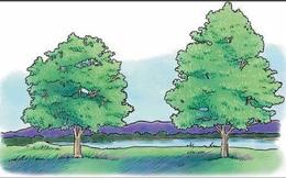 Từ câu chuyện nên chặt bạch dương hay cây thông, BIẾT NGAY lí do thất bại của nhiều người