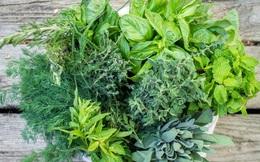 8 loại cây vừa dễ trồng vừa là kho thuốc quý trong nhà, đặc biệt là trong mùa dịch bệnh này