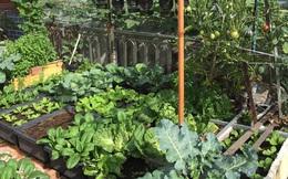 Sân thượng 25m² phủ kín rau quả tốt tươi nhờ kinh nghiệm tận dụng mai cua xin ngoài chợ làm nước tưới của mẹ đảm Đồng Nai