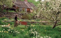 Bỏ phố về quê, bà cụ U100 biến mảnh đất quê thành căn nhà vườn trị giá 2 triệu USD, tận hưởng cuộc sống đẹp như tranh vẽ