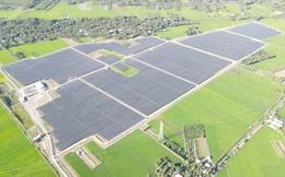 Lợi nhuận 6 tháng đầu năm của Bamboo Capital tăng đột biến 18 lần nhờ dòng tiền đến từ các nhà máy năng lượng mặt trời