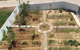 Mẹ đảm 4 con tự tay cải tạo mảnh đất trống thành trang trại rau quả chẳng thiếu thứ gì ở Quảng Ninh