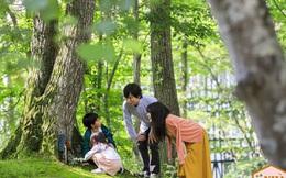 """Muốn đầu óc lúc nào cũng thư giãn, hãy mua nhà ở nơi có nhiều cây xanh và áp dụng """"tắm rừng"""" để giải tỏa căng thẳng: Liệu pháp diệu kỳ đến từ xứ sở mặt trời mọc mà bạn có thể chưa biết!"""