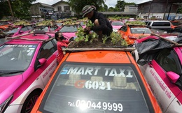 """Bị """"bỏ không"""" vì Covid, hàng nghìn taxi ở Thái Lan biến thành... vườn rau cứu đói tài xế"""