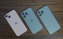 iPhone 13 màu nào được người Việt chọn nhiều nhất?