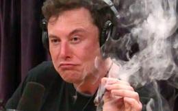 """Elon Musk lại """"chém gió"""": Cổ phiếu Tesla phải đáng giá 3.000 USD, """"nếu họ định giá chính xác"""""""