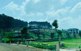 Đánh quả liều, một nhà đầu tư từ Hà Nội mạnh tay chi 5 tỷ đồng mua đất online tại Lâm Đồng làm farmstay
