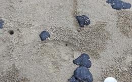 Hơn 20 km bờ biển Quảng Trị xuất hiện dầu vón cục dạt vào, khối lượng hơn chục tấn