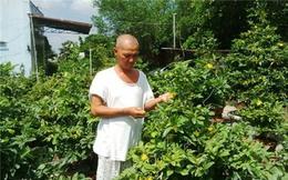 'Phù thủy' trồng mai ghép ra tiền tỷ