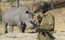 Ebola có thể gây đại họa lên đời sống hoang dã ở Châu Phi