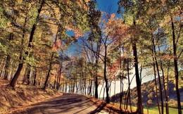 Vì sao mùa thu là mùa đẹp nhất trong năm?