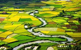 Cánh đồng lúa Bắc Sơn lộng lẫy trên báo nước ngoài