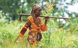 Bill Gates giới thiệu 4 sáng kiến giúp nông dân nghèo Châu Phi