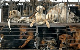 Chuyện ăn thịt chó ở đất nước giàu có bậc nhất thế giới