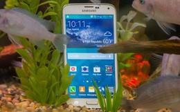 Samsung gặp khó: Doanh số Galaxy S5 thấp hơn 40% so với dự kiến