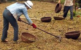 Cà phê thế giới thiếu hụt nghiêm trọng nhất trong 9 năm