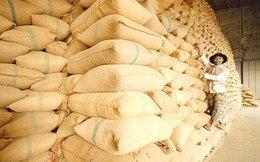 TS. Lưu Bích Hồ: 'Xuất khẩu lúa gạo bạc bẽo lắm'