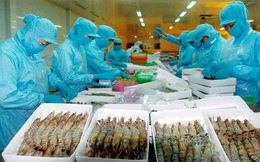 Minh Phú cùng 31 doanh nghiệp xuất khẩu tôm VN bị Mỹ áp thuế