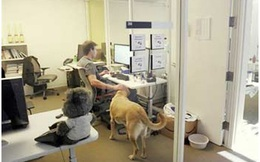 Mang vật nuôi đến văn phòng làm việc giúp giảm stress