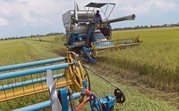 Thái Lan tập trung giành lại vị trí xuất khẩu gạo số 1 thế giới