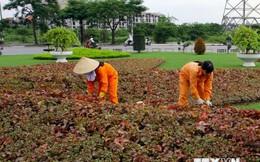 Hà Nội đặt mục tiêu tăng tỷ lệ bình quân cây xanh lên gấp 6 lần