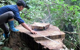 Đắk Lắk: Lâm tặc tàn phá tan hoang rừng sinh thái Bản Đôn