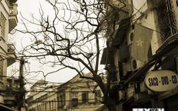 Hà Nội: Khai trương 6 tuyến phố đi bộ mở rộng tại khu phố cổ