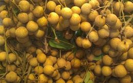 Rau quả Việt vào Hoa Kỳ: Đường còn gập ghềnh