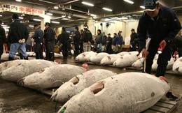 Nghề cá Nhật Bản: Bí mật của ngư dân