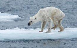 Tấm ảnh oái oăm về việc biến đổi khí hậu đang lan truyền dữ dội trên Internet