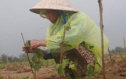 Làm nông được vay tín chấp đến 3 tỉ đồng