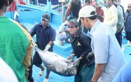 Ôm nợ vì… cá ngừ đại dương
