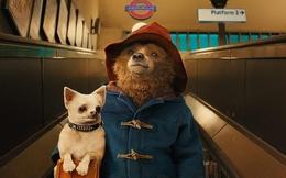 [Phim hay] Chú gấu Paddington: Phim gia đình lý tưởng cho dịp đầu năm