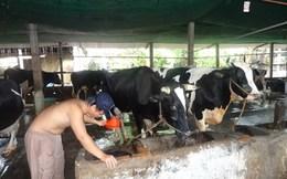 Nguy cơ giảm giá thu mua sữa