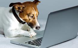 Vì sao chó không nhận ra chủ qua điện thoại, tablet?