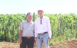 Đồng vàng trên cao nguyên: Những nông dân tỷ phú