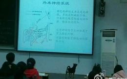 """Chó đi """"học đại học"""" ở Trung Quốc"""