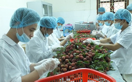 Xuất khẩu rau quả bứt phá, nhắm đích 2 tỉ USD