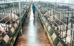 Nghịch lý lãi suất vay vốn chăn nuôi cao hơn tiêu dùng