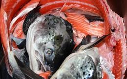 Mỗi ngày bán 300 bộ xương cá hồi