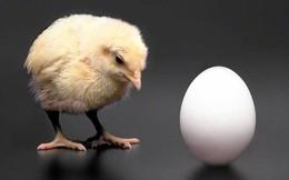 Gà có trước trứng
