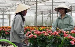 Báo Nhật: Không lâu nữa, Việt Nam sẽ trở thành trung tâm xuất khẩu hoa hàng đầu Châu Á