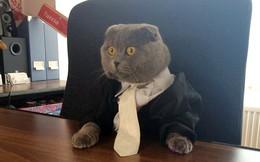 Công ty thuê mèo 9 tháng tuổi làm giám đốc truyền thông