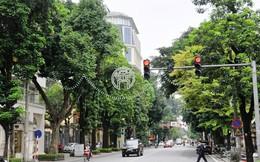 Hiến kế trồng cây xanh đô thị Hà Nội