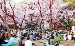 4 quy định luật pháp gây ngạc nhiên của Nhật Bản
